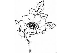 Рисунки цветов черно белые