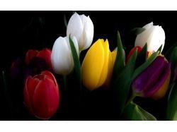 Обои на рабочий стол букет тюльпанов