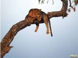 Скачать бесплатно картинки диких животных