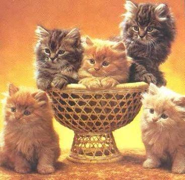 jumbo cat litter box liners