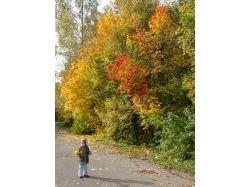 Картинки о осени