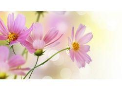 Картинки нежные цветы