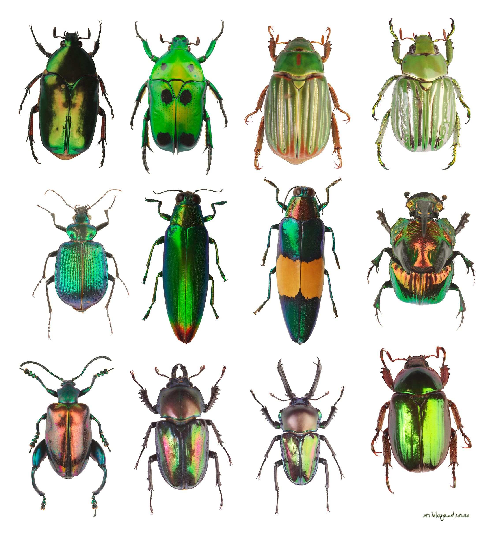 Классификация жуков в картинках