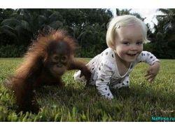 Прикольные картинки фото животных