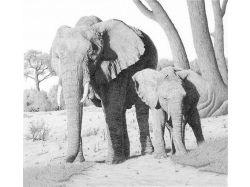 Рисунки диких животных карандашом