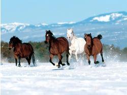 Лошади зимой картинки