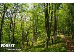 Фото лес весной