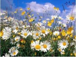 Картинка луга с цветами