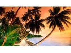 Океан и пальмы фото