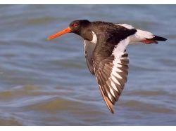 Птицы египта фото