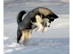 Картинки щенков скачать
