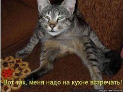 Картинки смешные животные