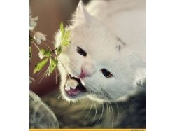 Картинки с девушками и кошками
