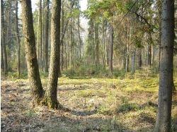 Русский лес картинки