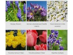Декоративные цветы фото с названиями