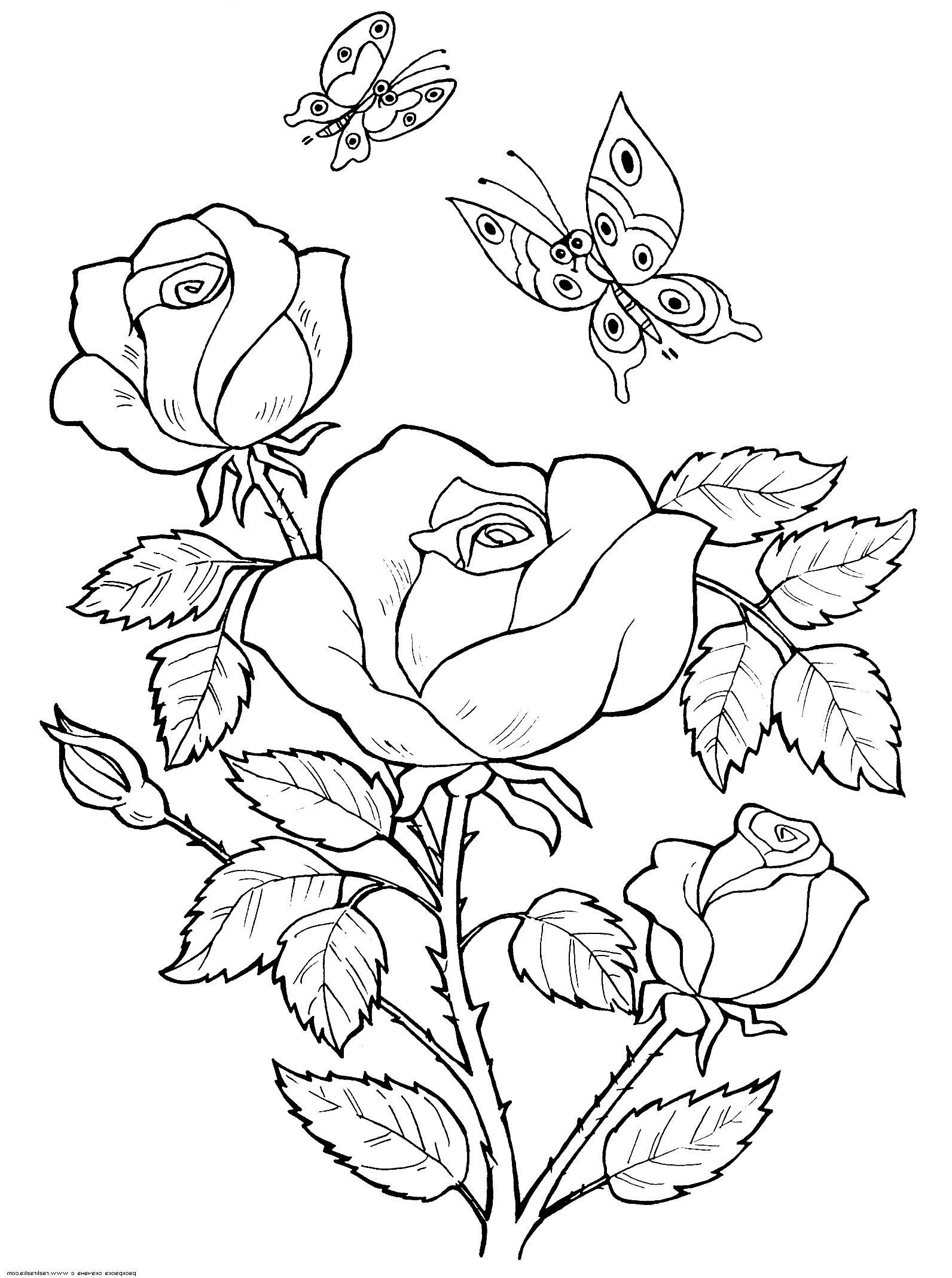 Рисунки цветы розы » Скачать лучшие картинки бесплатно на ...