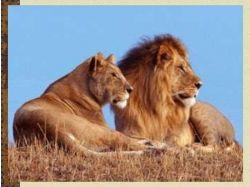 Картинки животных диких
