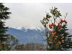 Ранняя весна фотографии