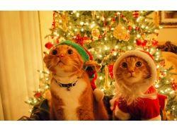 Новогодние картинки коты 9