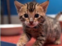 Маленькие картинки кошек