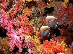 Картинки на телефон подводный мир
