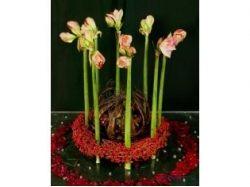 Фото 7 цветов
