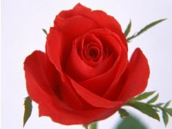 Фото 1 цветка