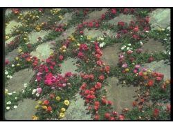 Картинки цветы на рабочий стол