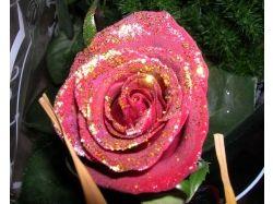 Фото блестящих цветов