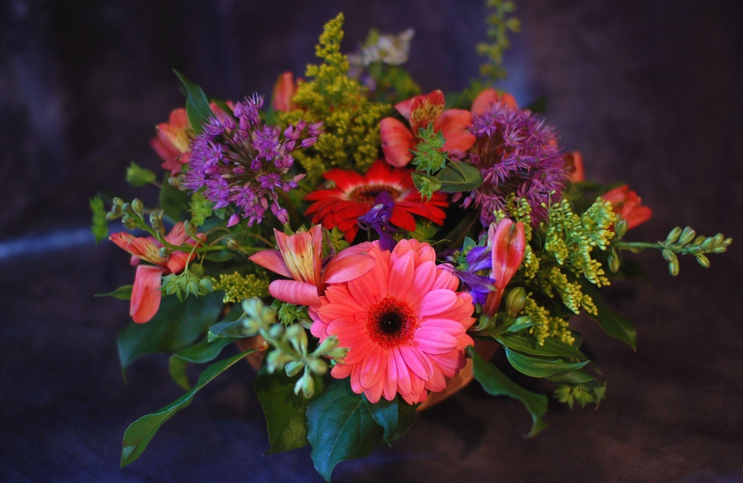 Сальвия рио фото цветов
