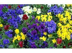 Домашнее цветы картинки