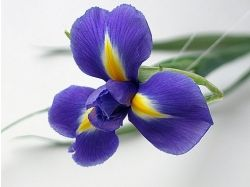 Мужские цветы фото 2
