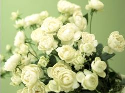Мужские цветы фото 5