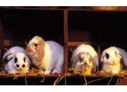 Животные красной книги украины фото и описание
