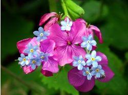 Картинки самых красивых цветов