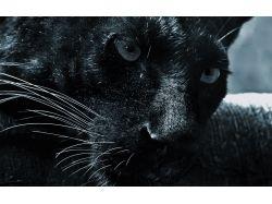 Слова животное фото