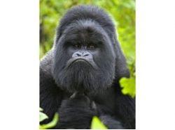 Животные фото смотреть онлайн