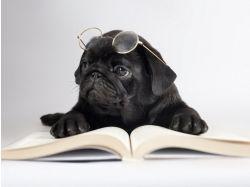 Черная книга животных фото