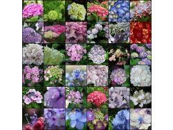 Фото самых красивых цветов