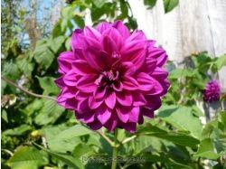 Фото садовых цветов с названием