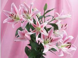 Цветы для любимой картинки