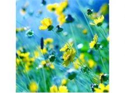 Оригинальные картинки цветов