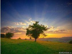 Картинки природа утром