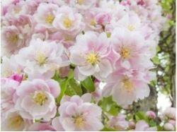 Картинки поля цветы