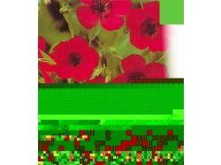 Красивые картинки цветов на аватарку