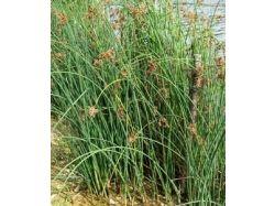 Цвет травы фото