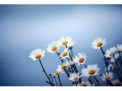 Картинки фон цветы красивые