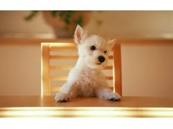 Картинки животных собак