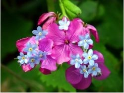 Весенние цветы картинки для детей
