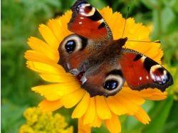 Картинка бабочка на цветке
